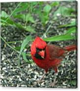 Cardinal In Springtime Canvas Print