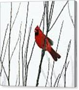 Cardinal In Willow  Canvas Print