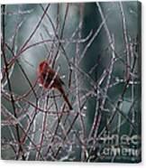 Cardinal On Ice Canvas Print