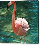 Caribbean Flamingo 2 Canvas Print