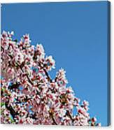 Cascade In Pink Canvas Print