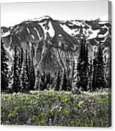 Cascade Range Meadow Canvas Print