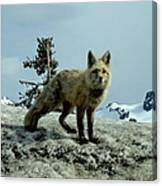 Cascade Red Fox 2 Canvas Print