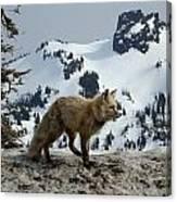 Cascade Red Fox 3 Canvas Print