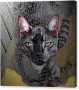 Cat Art Of Relaxing Canvas Print