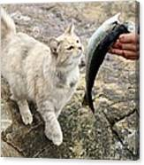 Cat Being Fed A Fish Canvas Print