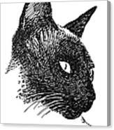Cat Drawings 5 Canvas Print