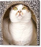 Cat From Cats House Canvas Print