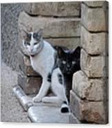 Cat Guardians Canvas Print
