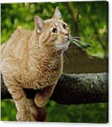 Cat Hanging On A Limb Canvas Print