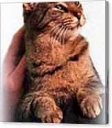 Cat Heaven Canvas Print