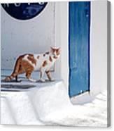 Cat In Mykonos Canvas Print