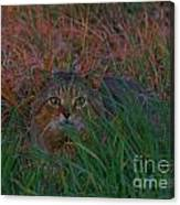 Cat In The Grasses Canvas Print
