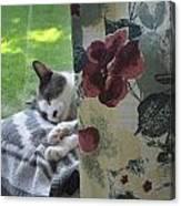 Cat Nap Curtain Canvas Print