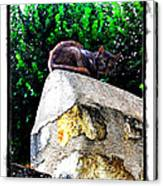 Cat On Medieval Wall Canvas Print