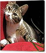 Cat On Red Canvas Print
