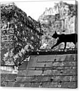 Cat On Slate Roof Canvas Print