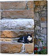 Cat On Stairs Canvas Print