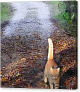 Cat On The Road Again Canvas Print