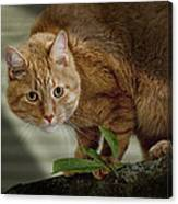 Cat Out On A Limb Canvas Print