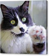 Cat Reaches For Camera Canvas Print