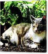 Cat Relaxing In Garden Canvas Print