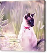 Cat Sitting By Daffodils Canvas Print
