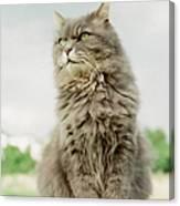 Cat Sitting Canvas Print