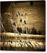 Cat Tails And Hay Rolls Canvas Print