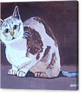 Cat With Brown Background Canvas Print