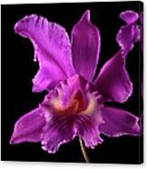 Catalea Orchid Canvas Print