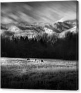 Cataloochee Elk Grazing The Fields Canvas Print