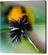 Caterpillar In Abstract Canvas Print