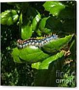 Caterpillar Photograph Canvas Print