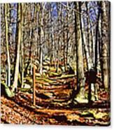 Catoctin Trail Canvas Print