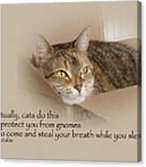 Cats Protecting You From Gnomes - Lily The Cat Canvas Print
