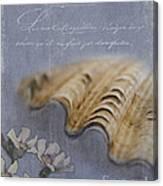 Catspaw Seashell Canvas Print