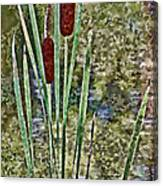 Cattails Along The Pond Canvas Print