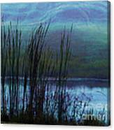 Cattails In Mist Canvas Print