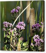 Cattails  Canvas Print