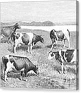 Cattle, 1888 Canvas Print