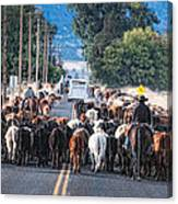 Cattle Drive 3 Canvas Print