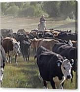 Cattle Drive Canvas Print