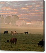 Cattle In The Fog Canvas Print