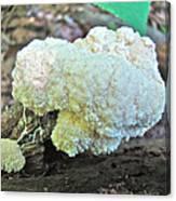 Cauliflower Mushroom On Log Canvas Print
