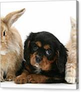 Cavalier King Charles Spaniel Pup Canvas Print