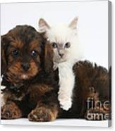 Cavapoo Pup And Blue-point Kitten Canvas Print