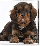 Cavapoo Pup Canvas Print