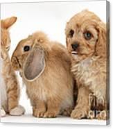 Cavapoo Pup, Rabbit And Ginger Kitten Canvas Print