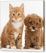 Cavapoo Puppy And Kitten Canvas Print